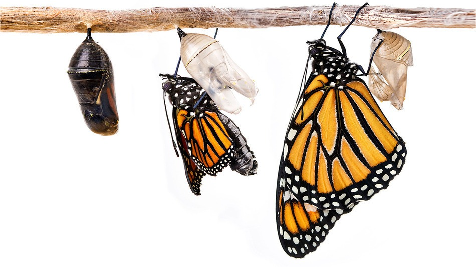 ButterflyTransform